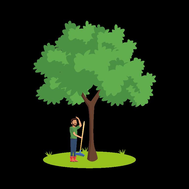 vivi coltiva l'albero